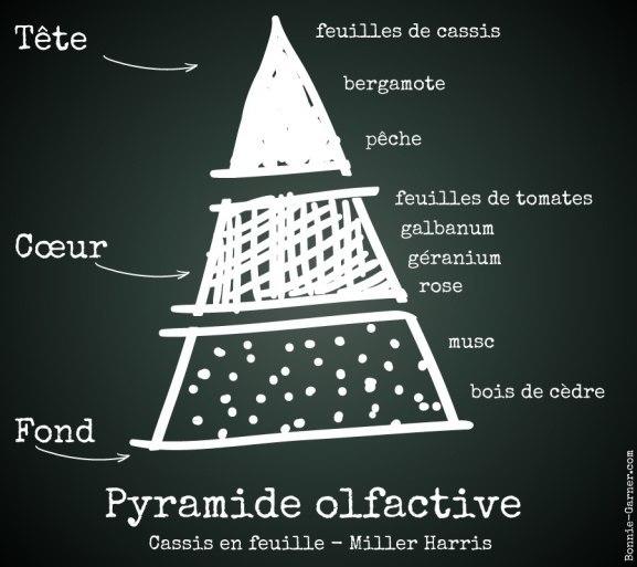 Pyramide olfactive: Cassis en feuille - Miller Harris