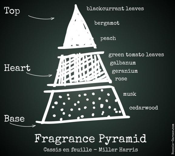 Fragrance Pyramid: Cassis En Feuille - Miller Harris